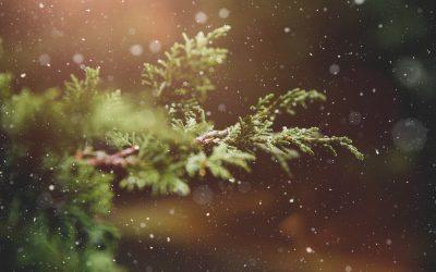 Fermeture hivernale ❅